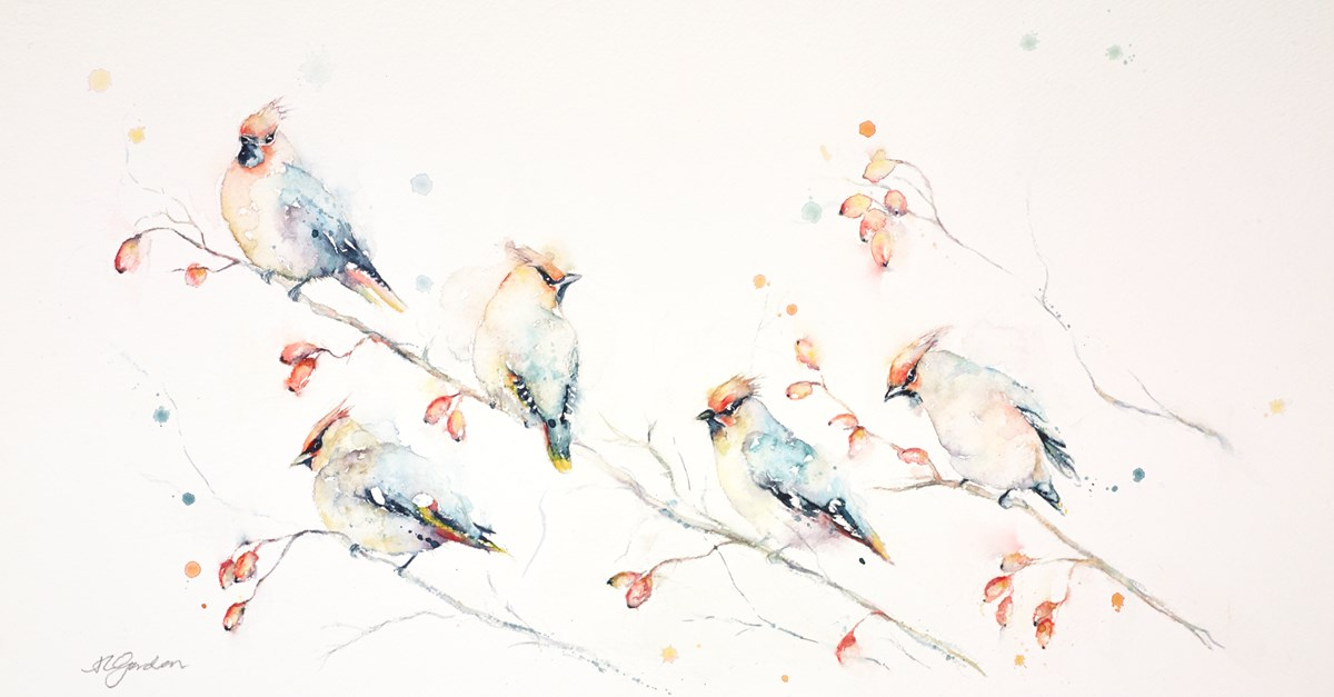 Exotic Winter Visitors - Waxwings